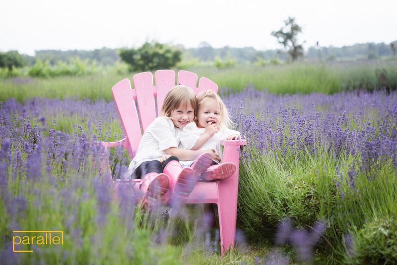 Conway Lavender Farm 001