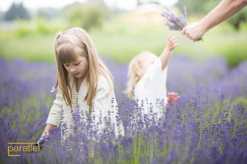 Conway Lavender Farm 015