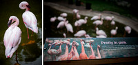 Diptych 1_Flamingo Exhibit_950px